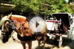 Carriage Horse In Old City Philadelphia Stock Video